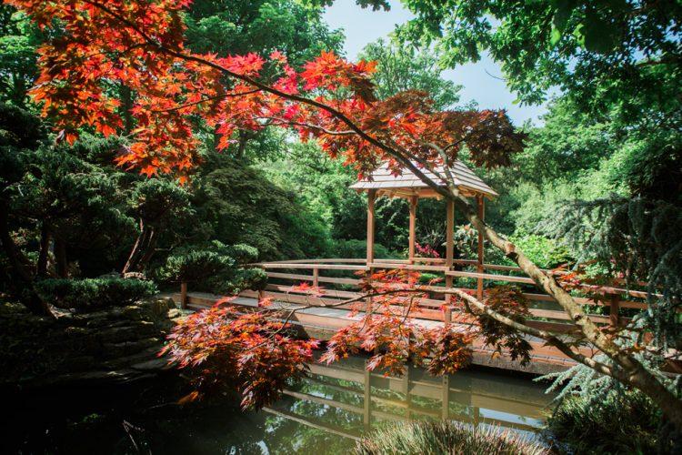 Japanese_Garden_Cornwall_Natalie_Myra_Photography_8012